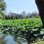 El Parque Ueno