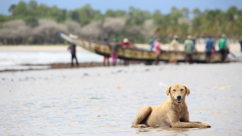 Fotos Fer en Gambia (1)